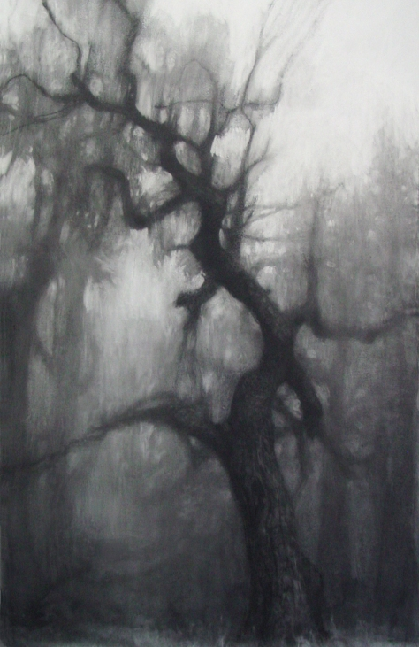 "drawing ""Large Oak"""